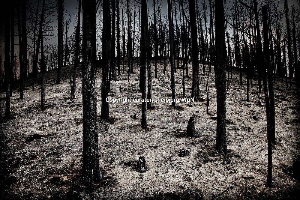Dead trees, Peloponnes, Greece, on Tuesday, Aug. 28, 2007