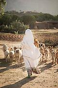 Goat herder, Hawzen, Gheralta area, Tigray, Ethiopia, Horn of Africa