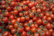 Organic ripe tomatoes on the vine for sale at a market in London.