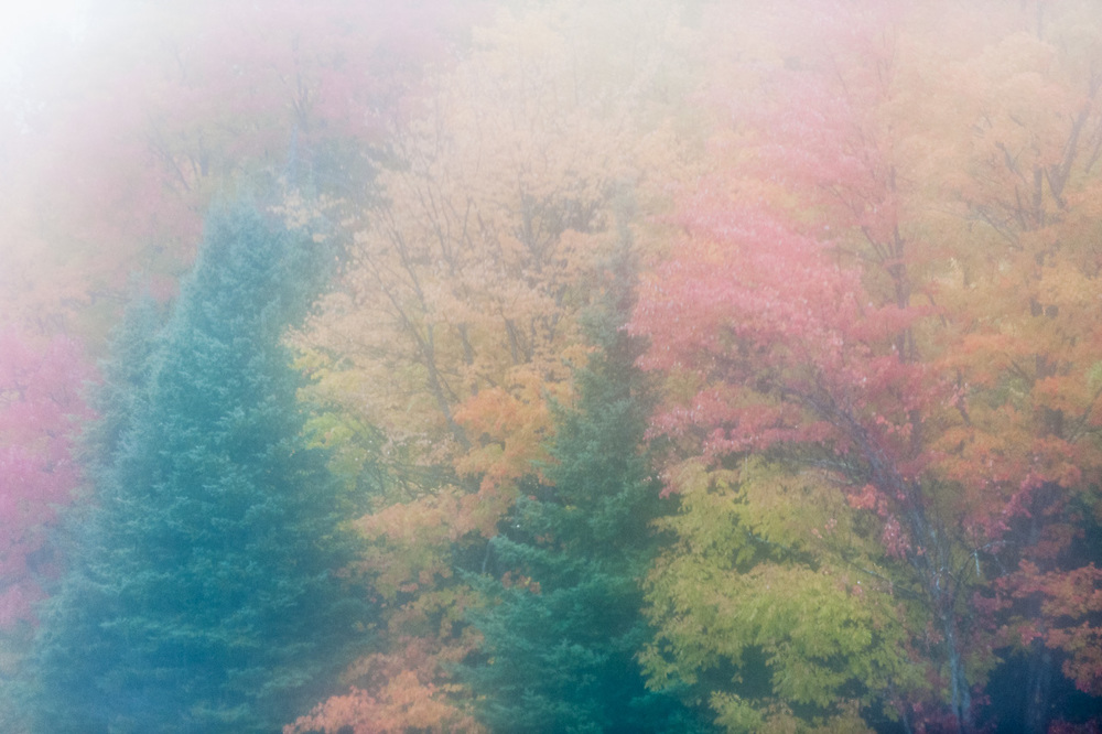 Autumn forest in fog along Highway 41, October, Western Section of the Hiawatha National Forest, Upper Peninsula, Michigan, USA