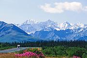 Alaska. Fireweed (Epilobium angustifolium) along highway.