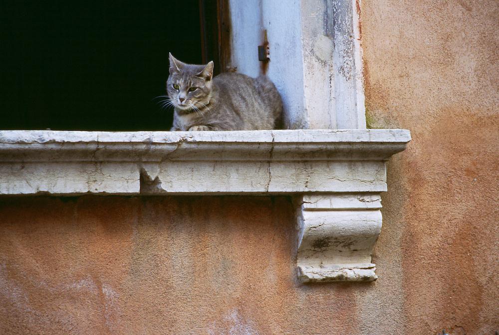 Cat sitting on window sill in Venice Italy
