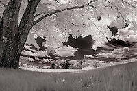 Infrared at Ahern Park Laconia NH.©2016 Karen Bobotas Photographer