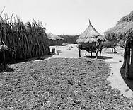 Karamoja, Uganda , Africa. - sorgum harvest  and grain bins