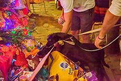 Dogs Brees and Roux sniff out what's under the Christmas Tree.  Christmas Tree Lighting and Seasonal Fundraiser for the Humane Society of St. Thomas.  St. Thomas, USVI.  11 De© Aisha-Zakiya Boyd