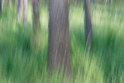 Trees and grasses, Texas Buckeye Trail, Great Trinity Forest, Dallas, Texas, USA.
