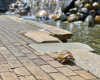 Turtle walking near Niagara Falls at Shinjuku Chuo Park in Tokyo Image taken with a Leica TL2 camera and 35 mm f/1.4 lens (ISO 100, 35 mm, f/3.5, 1/320 sec).