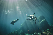 Underwater: WMs, previous