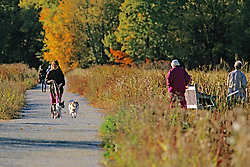 Woman Walking Dogs At Great Meadows