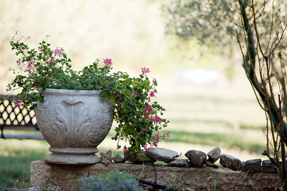A potted flower is part of the landscape of a yard in  L'Isle-sur-la-Sorgue, France