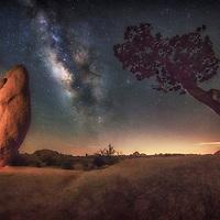 Milky Way with the rocks and trees of Joshua Tree National Park, California.