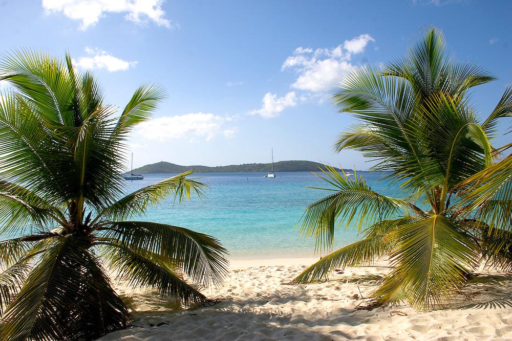Two palm trees on Solomon's Beach overlooking the water in Solomon's Bay on Saint John, U.S. Virgin Islands