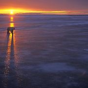 Polar Bear (Ursus maritimus) walking on frozen Hudson Bay during sunset in Churchill, Manitoba, Canada.