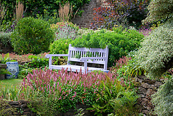 Mauve painted bench at Pettifers with Persicaria affinis 'Donald Lowndes' AGM in the foreground