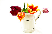 Cutout of tulip flowers in an enamel vase on white background