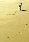 Portuguese Summer. A dog runs along the beach at Praia Grande in Sintra.