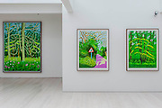 A collection of David Hockney's ipad based colour drawings - themed the Arrival of Spring in Woldgate - are for sale as prints at Annely Juda Fine Art. They are being exhibitied with charcoal drawings on the same theme and his innovative 9 video display of Woldgate Woods in winter. Dering Street, London, UK.