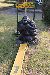 Guide To SHow How Far Away You Need To Be Away From Gorilla's (7 Meters or 21Ft)