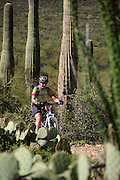 A mountain bike cyclist rides along saguaro cactus (Carnegiea gigantea) in the Sonoran Desert on the Starr Pass Trail in Tucson Mountain Park in the Tucson Mountains, west of Tucson, Arizona, USA.