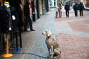 Een hond wacht geduldig voor een winkel in Utrecht.<br /> <br /> A dog is waiting patiently in front of a shop.