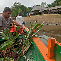 A tourist boat carrying a flowering bromeliade approaches the Amazon Refuge Wildlife Conservation Center on the Yanayacu River in Peru's Amazon Jungle.