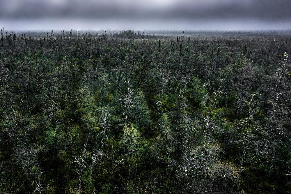Boreal forest at James Bay, Quebec
