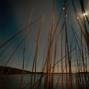 Reeds by the waterside at a lake in northern Sweden