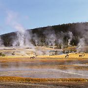 Old Faithful Geyser Basin in Yellowstone National Park.