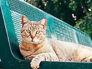Closeup of a ginger cat on a green bench