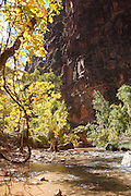 Inside the Temple of Sinawava, Zion National Park, on the Pa'rus Trail, Utah, United States of America