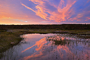 Morning light reflected in wetland <br /> Belburns<br /> Newfoundland & Labrador<br /> Canada