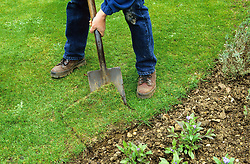 Repairing a damaged lawn edge.<br /> Lifting the damaged sectiion with a spade