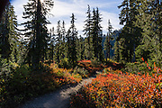 Hike through red and orange fall foliage colors on Park Butte Trail in Mount Baker Wilderness, Mount Baker-Snoqualmie National Forest, Washington, USA.