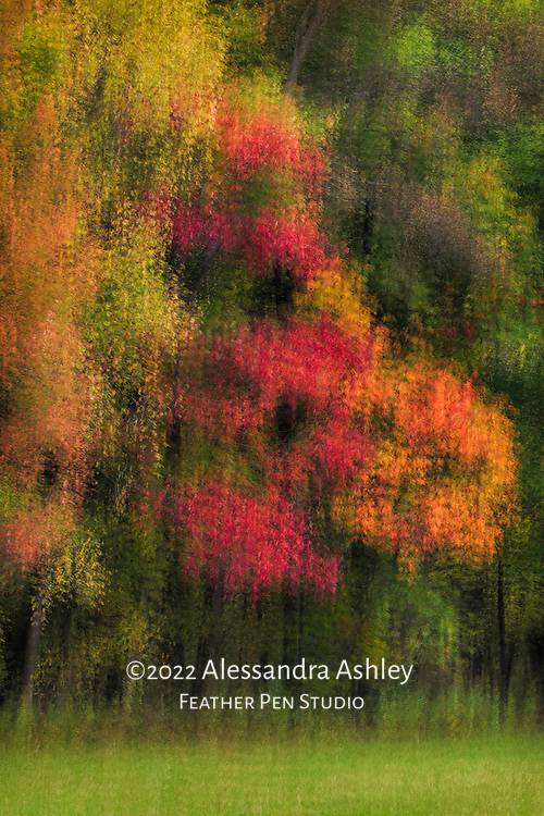 Multi-exposure montage, autumn colors of midwestern woods.