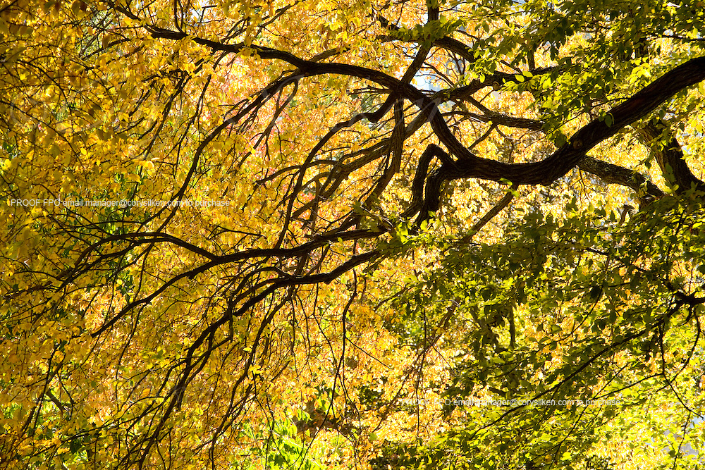 Fall foliage in Boston Common.