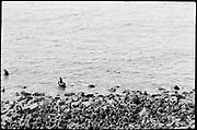 "9707-K203. written on original negative: ""Harem on Gorbatch Rookery"" St. Pauls Island. Pribilof Group. July 11, 1919"