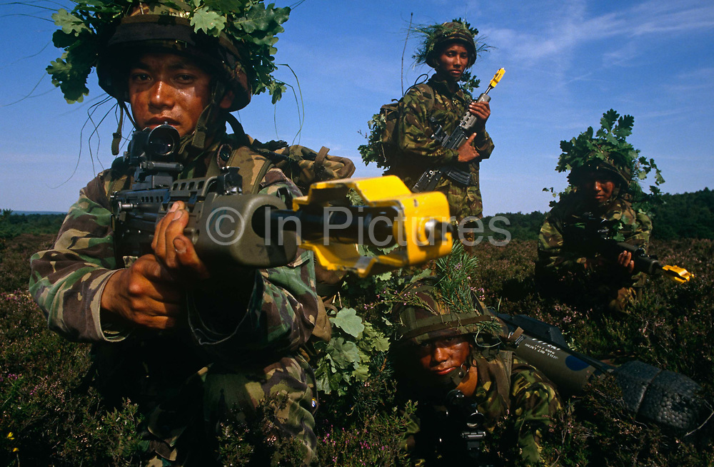 Four members of the Royal Gurkha Rifles are on tactical manoeuvres on heathland above Farnborough airfield, England. These Nepali-born boys belong to an elite Regiment of the British army. Every year 60,000 boys attend recruiting sessions in villages and towns in the Himalayan Kingdom but only 150 are selected each year to serve on active duty across the world. They fly to the UK for basic soldier training where they learn the skills required for infantry, transport, communications or clerical duties. Their reputation as a fierce but intensely loyal fighting force and many Victoria Crosses were won for bravery during World War 2. Here they are seen cradling modern SA-80 rifles while dressed in camouflaged helmets with oak leaves. The nearest to the camera points his weapon past the viewer with a yellow blank cover attached.
