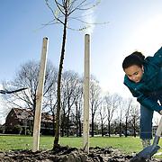 Nederland Rotterdam 19 maart 2008 20080319..Leerlingen planten nieuwe bomen aan in Rotterdam Schiebroek op de nationale boomfeestdag..Boomfeestdag: plant bomen in eigen land ter CO2-compensatie...Op de Boomfeestdag van aanstaande woensdag 19 maart zullen zoveel bomen geplant gaan worden, dat hiermee een substantiele bijdrage geleverd wordt aan een schoner klimaat in EIGEN land! Dit meldt Stichting Nationale Boomfeestdag, bij monde van directeur Peter Derksen. Uit de aanmeldingen blijkt dat in ruim 350 gemeenten naar verwachting 115.000 kinderen op de Boomfeestdag zeker 230.000 bomen planten. Dit is meer dan andere jaren en is een duidelijke bevestiging dat bomen planten 'hot' is. Het levert een bijdrage aan de CO2 reductie van ruim 275.000 kg, aldus Peter Derksen. Stichting Nationale Boomfeestdag schat dat er sinds de start van de Boomfeestdag in 1957 zeker 10 miljoen bomen zijn geplant. Berekend is dat hiermee ongeveer 120 miljoen kilogram CO2 is opgenomen. De organisatie vindt dat er meer aandacht moet worden besteed aan schonere lucht in eigen land en roept gemeenten en bedrijven op om veel meer bomen in eigen land te planten ter CO2-compensatie en niet alleen in landen als bijvoorbeeld Oeganda...De aftrap van de 52-ste Boomfeestdag vindt plaats in Rotterdam waar de Nationale Viering wordt gehouden met 2008 kinderen. Eregasten zijn minister Gerda Verburg, burgemeester Ivo Opstelten, Gevolmachtigd Minister Paul Comenencia van de Nederlandse Antillen, Sparta-trainer Foeke Booy, Feyenoordspeler Theo Lucius, Charlene van Idols en Characters uit VAREKAI van Cirque du Soleil. Het programma wordt gepresenteerd door ambassadrice Sandra Reemer en door Jochem van Gelder. ..Accentlocatie is Park Zestienhoven waar 900 kinderen op het dak van de Hoge Snelheidslijn een start maken met het planten van ruim 300 van de 900 te planten bomen. De ruim 2000 kinderen zullen die dag op diverse locaties in Rotterdam 2008 bomen planten. De gemeente Rotterdam en de organisatie wil doo