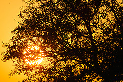 Sun setting behind trees, Hill Country between Blanco and Fredericksburg, Texas, USA