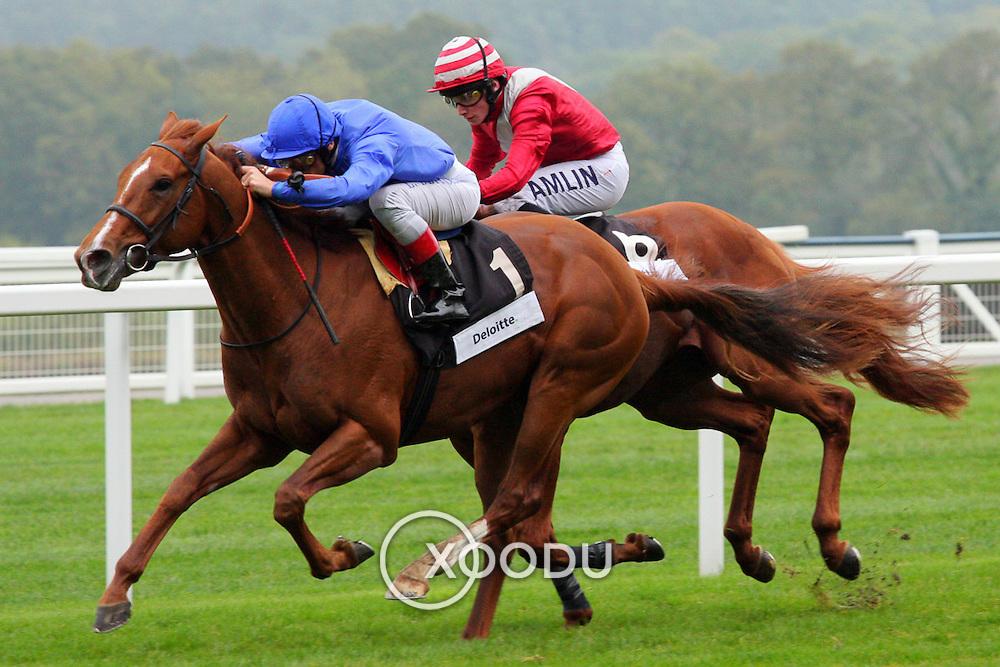 Horse race, Ascot, England (October 2007)