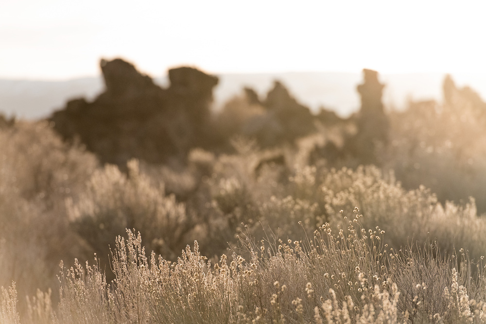 Morning lights up rabbit brush and sage along the shores of Mono Lake as surreal tufa formations stand in the background
