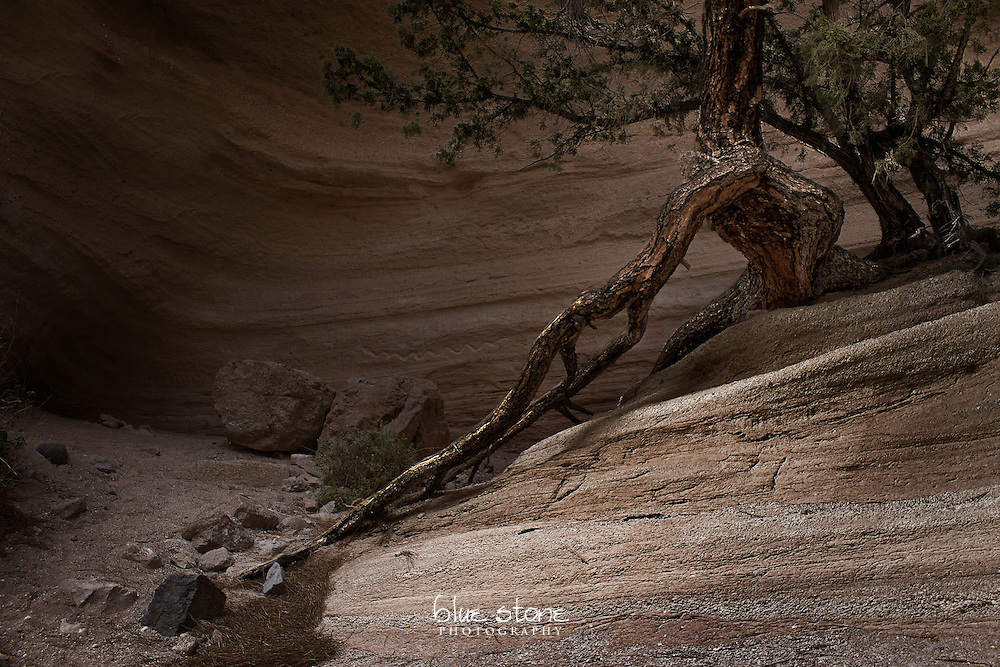 A tree inside a slot canyon outstretches its roots to quench its thirst during monsoon rains.<br /> <br /> Wall art is available in metal, canvas, float wrap and standout. Art prints are available in lustre, glossy, matte and metallic finishes.