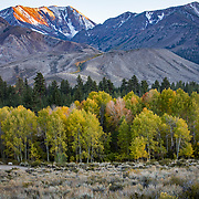 The Fall season in the Eastern Sierras is one of the most beautiful seasons to visit. A grove of Aspens line Mammoth Creek in this HDR photograph.