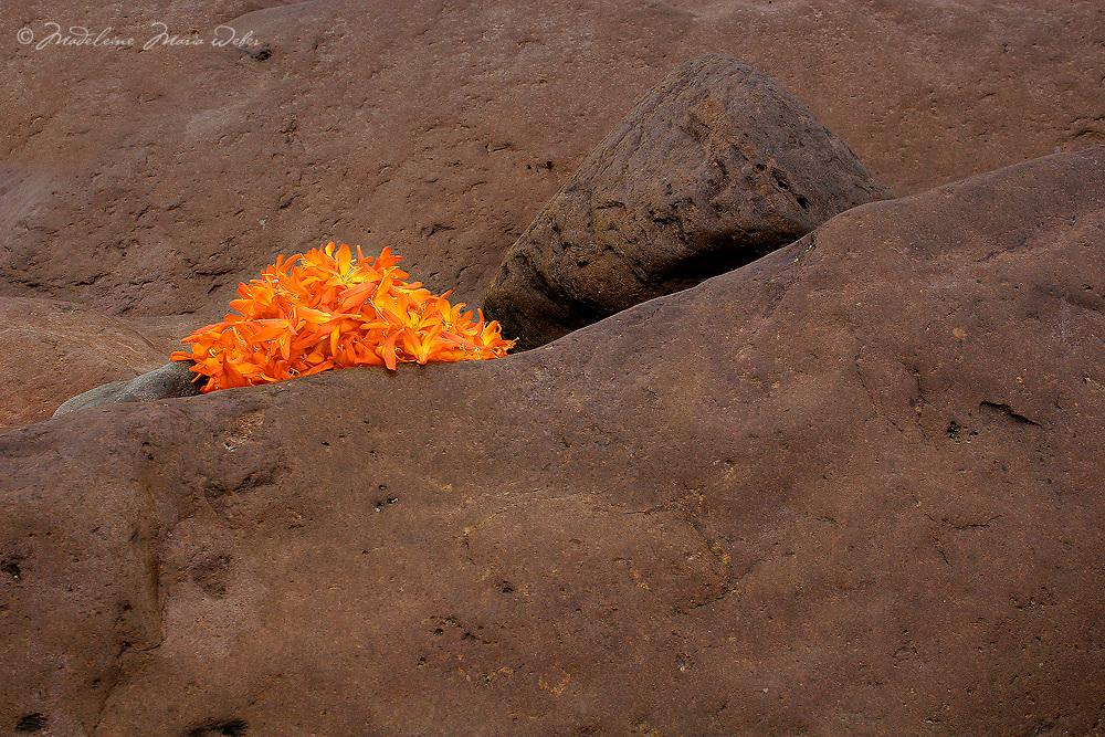 Irish Montbretia Flower Heads and Rocks,  / fa040