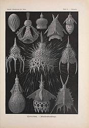 Kunstformen der Natur<br /> Leipzig und Wien :Verlag des Bibliographischen Instituts,1899-1904.<br /> https://biodiversitylibrary.org/page/47388125