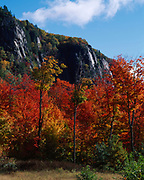 Autumn colors of Sugar Maples, Acer saccharum growing below granite cliff near King Mountain north of Sault Ste. Marie, Ontario, Canada.