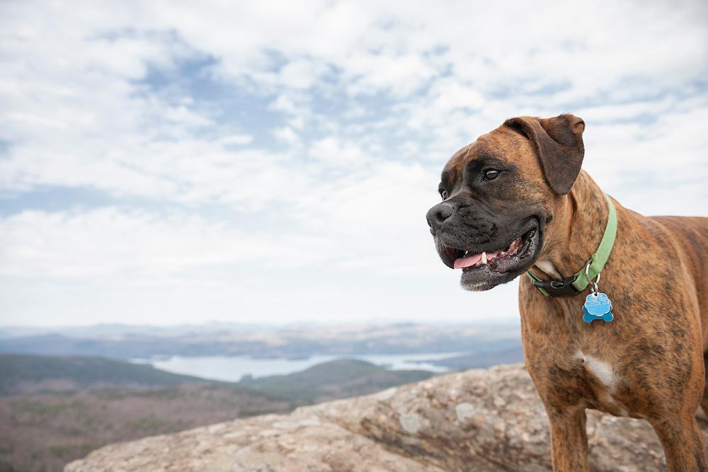 Profile of boxer on summit of Sleeping Beauty Mountain