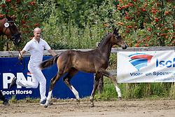 Latano V <br /> KWPN CK Turnhout<br /> Dena Stables - Turnhout 2016<br /> © Hippo Foto - Dirk Caremans<br /> 21/07/16