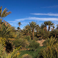 Africa, Morocco, Skoura. Palm Groves in Skoura desert.