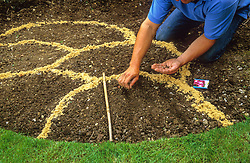 Making a border of annuals<br /> Sowing seed in drills within areas marked out with sand